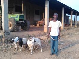 Le gardien-jardinier et les chèvres de la cour
